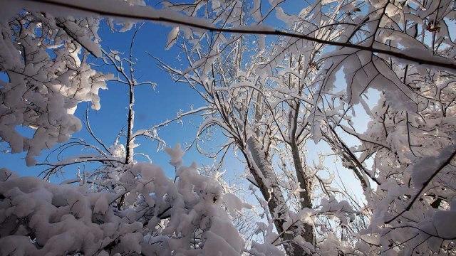 its sooo fresh on winter!