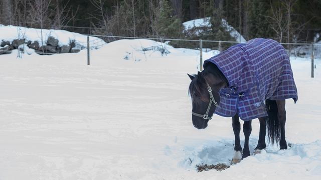 hehe... kuda sweden pakai jacket sejuk...