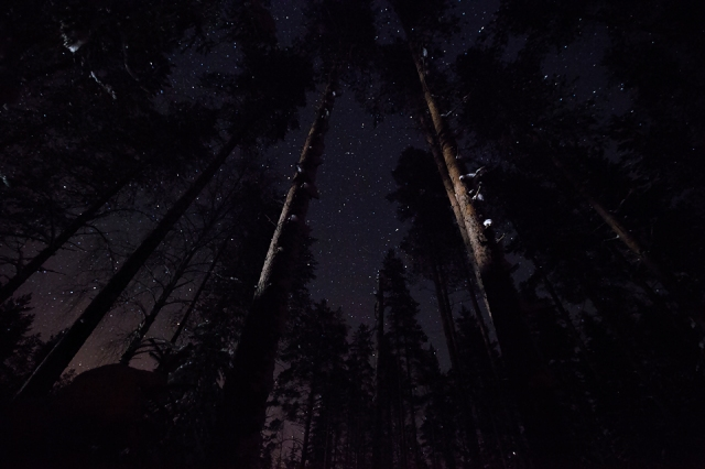 sleeping in the dark woods under bright stars
