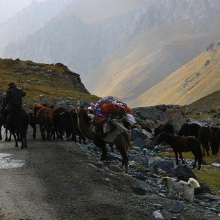 Kazakh Nomad