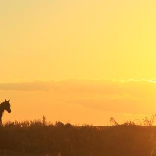 Kazakh Horseman