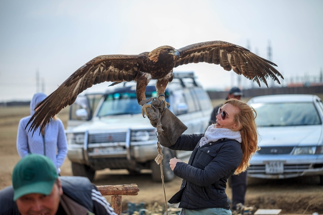 badass nearly 8kg eagle, which can kill a wolf!
