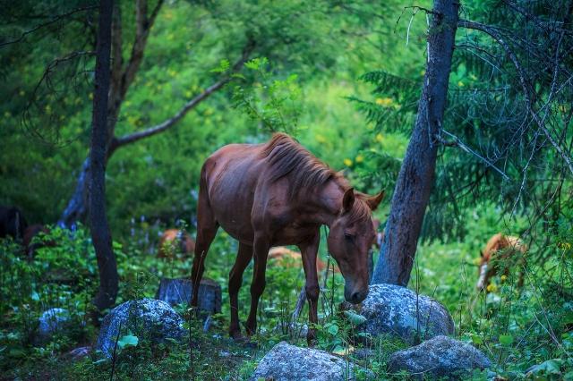 found some wild horses