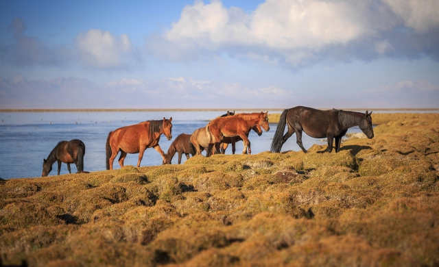 horses having breakfast on the lake
