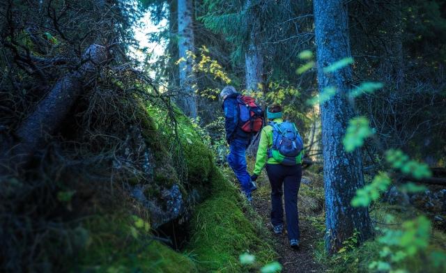 started trekking in the wild forest